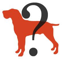 財報狗到比是誰?